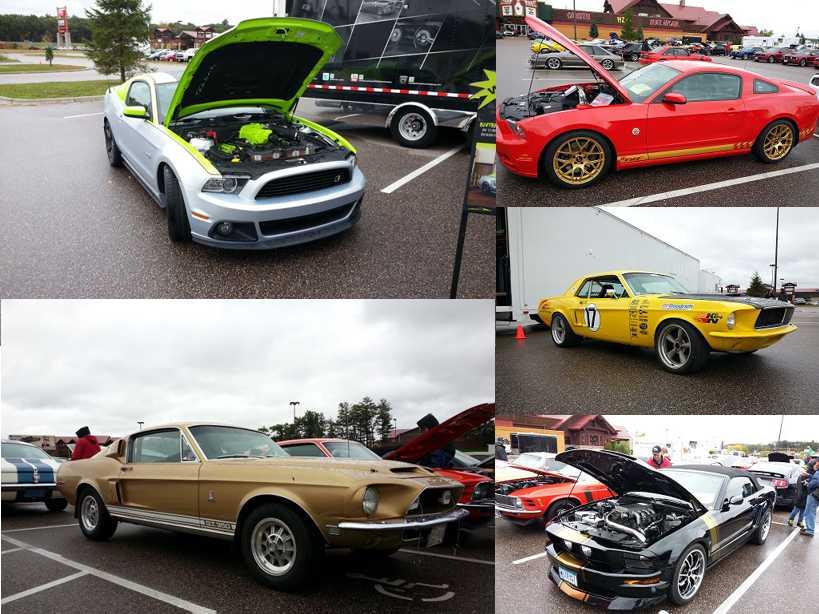 Mustangs 1.jpg