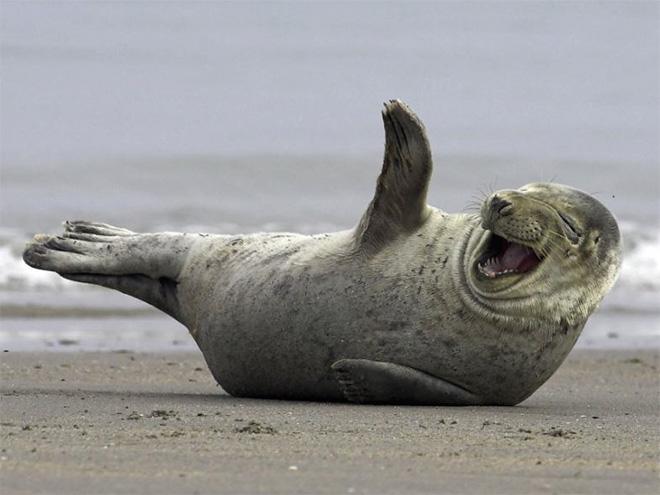 rofl seal.jpg