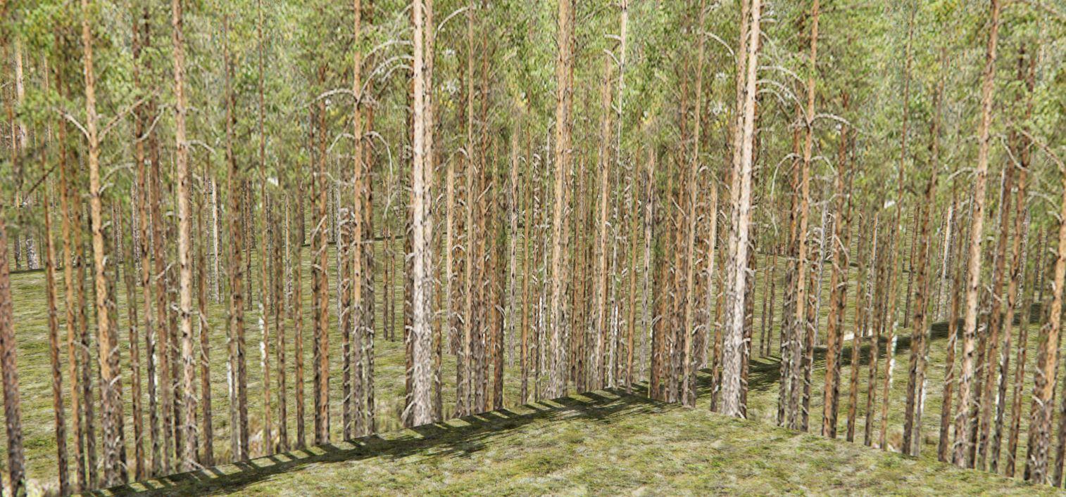 treewalls2.JPG