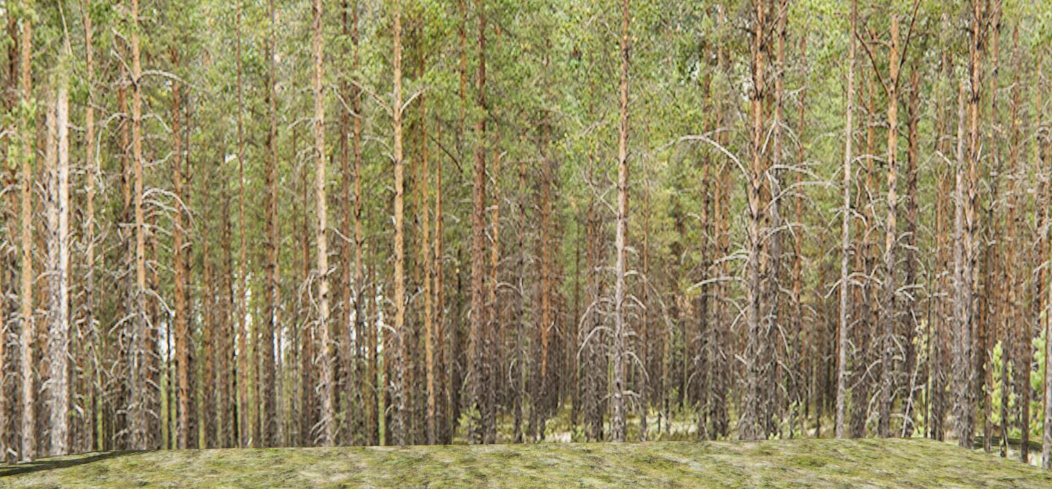 treewalls3.JPG