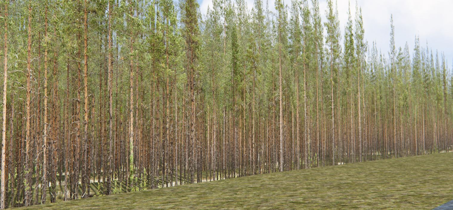 treewalls6.JPG
