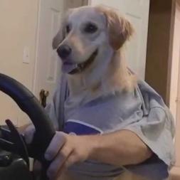 Sim-Racing Dog